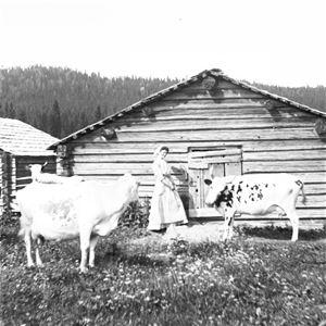 Från Sundsvalls museums bildarkiv. Fotograf Birger Pettersson, Kvinnor och kor - fäbodliv i Medelpad - Ett föredrag