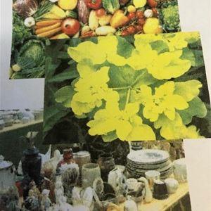 Turist- och hembgför, Växt- och Prylloppis på Nedangården