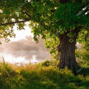 Samhällsspegeln special - Natur & klimat