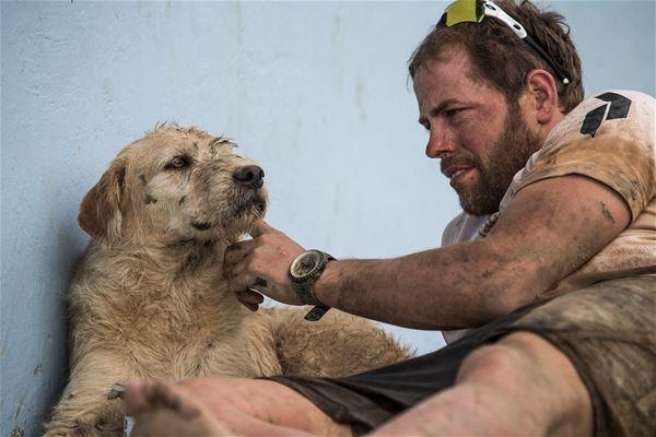 © Copy: https://www.facebook.com/events/862569377563244, Arthur - gatuhunden som lämnade djungeln och hittade hem