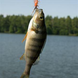 Fiska på höstlovet!