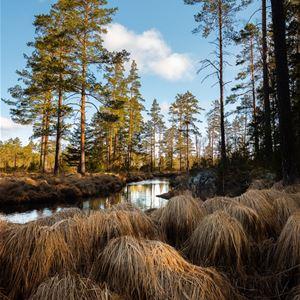 Foto: Kent Kirjonen, Fotoutställning - Kent Kirjonen