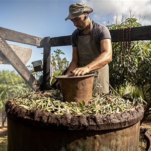 From the garden to the still - The local manufacture of an essential oil