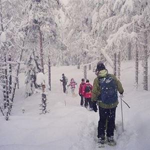 Lotta Backlund, Snöskovandring i vinterskog.