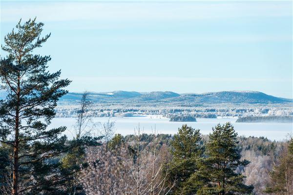 Utsikt över is på Orsasjön. TTrädtoppar i förgrunden och blå himmel.