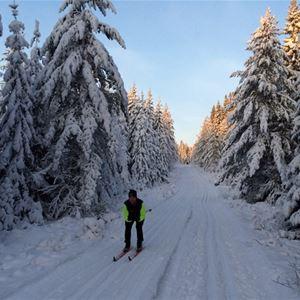 Skidåkare i skidspåret med omkringliggande snötyngd skog.
