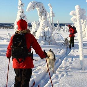 Två skidåkare samt hund i skidspår.