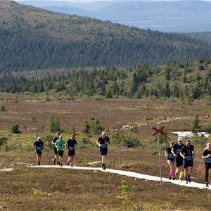 Flera personer springer efter led på fjället.