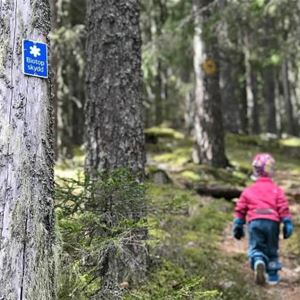 A child is hiking in the forest.