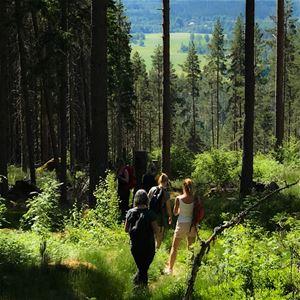 Skogsvandring med sång