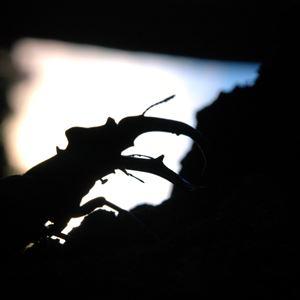 Ekoxar och fladdermöss