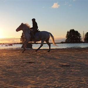 © Mariann Berggren, Häst i solnedgång.