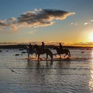 © Mariann Berggren, Hästar i solnedgång.