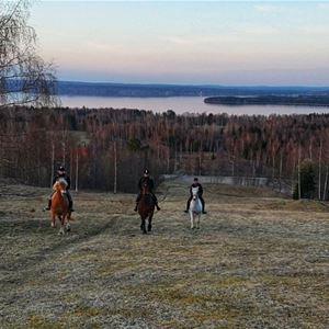 © Mariann Berggren, Hästar på en äng.
