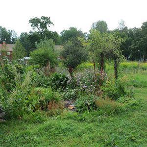 Lummig och grönskande trädgård.