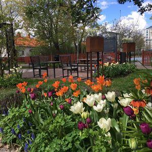Blomrabatt med små träd och parkbänkar i bakgrunden.