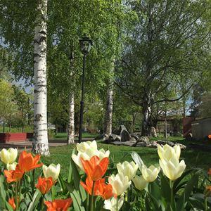 Blomster i fokus och gräsmatta och träd i bakgrunden.