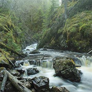 © Stefan Hamréus, Vatten som forsar fram mellan skogens klippor.