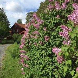 August Strindberg på Furusund