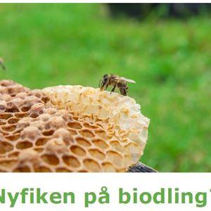 Föreläsning: Nyfiken på biodling?