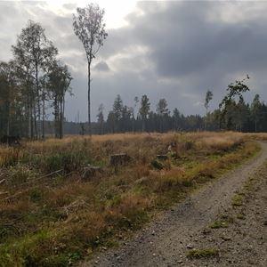 © Anders Andrae, Mulen dag och en grusad stig som leder fram.