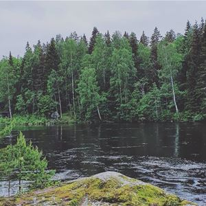 Skogsbad i teori och praktik