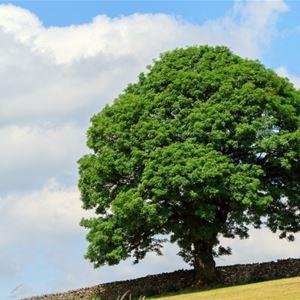 Lunchföredrag - Klimat, kulturarv och katastrofer : vad vi kan lära från träd