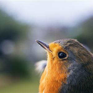 Sträckfågelmorgon vid Segerstads fyr