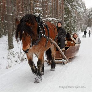 Häst som drar en släde.
