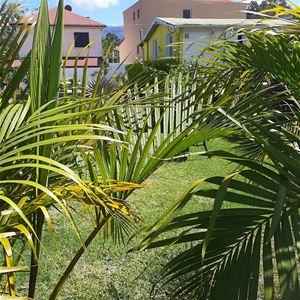 Le Palmier de la Paix
