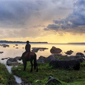 © Mariann Berggren, Hästar vid solnedgång.
