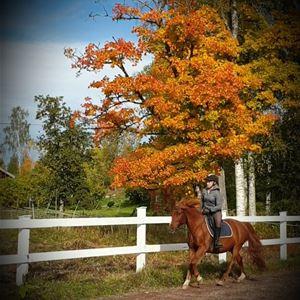 Häst som travar fram med ryttare.