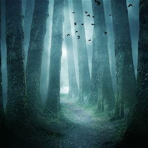 © Copy: https://www.facebook.com/events/1567300816956569/?ref=newsfeed, stig och träd i en lit e kuslig skog