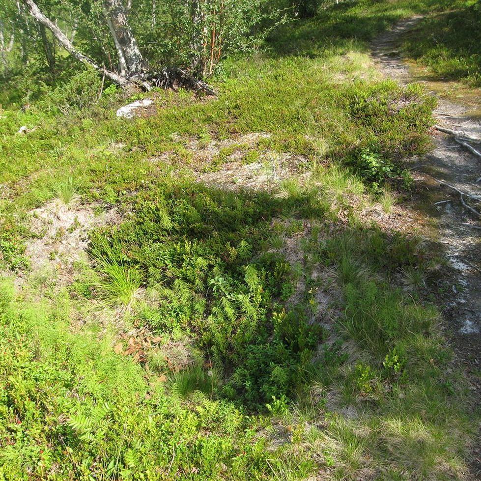 © Hemavan Tärnaby PR förening, Fångstgropar i Solberg
