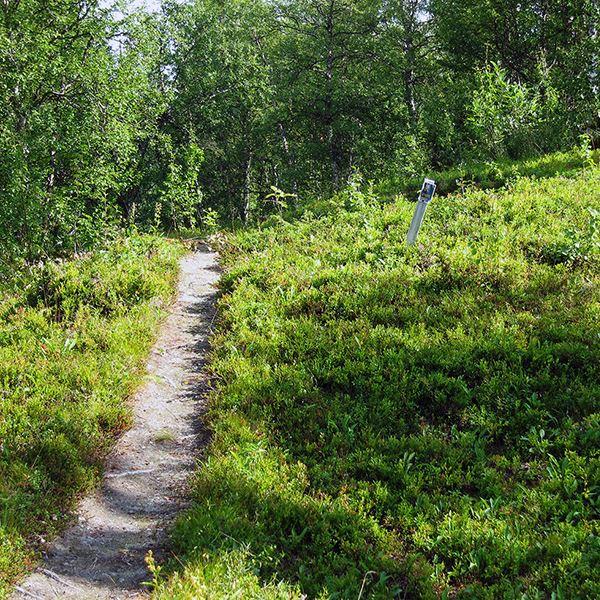 Fångstgropar i Solberg