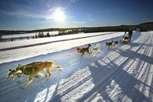 Dog sled ride with Hedlunda Husky