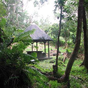 La Forêt de Mare Longue - Visites Patrimoine