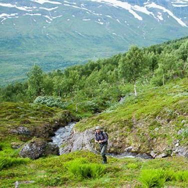 Marianne Lindgren,  © Hemavan Tärnaby PR-förening, Rödingsnäset and the Brudkulla orchid