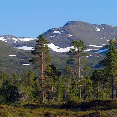 Sam Hedman,  © Hemavan Tärnaby PR-förening, Jovattnets dalgång, med Krutfjellsvegen
