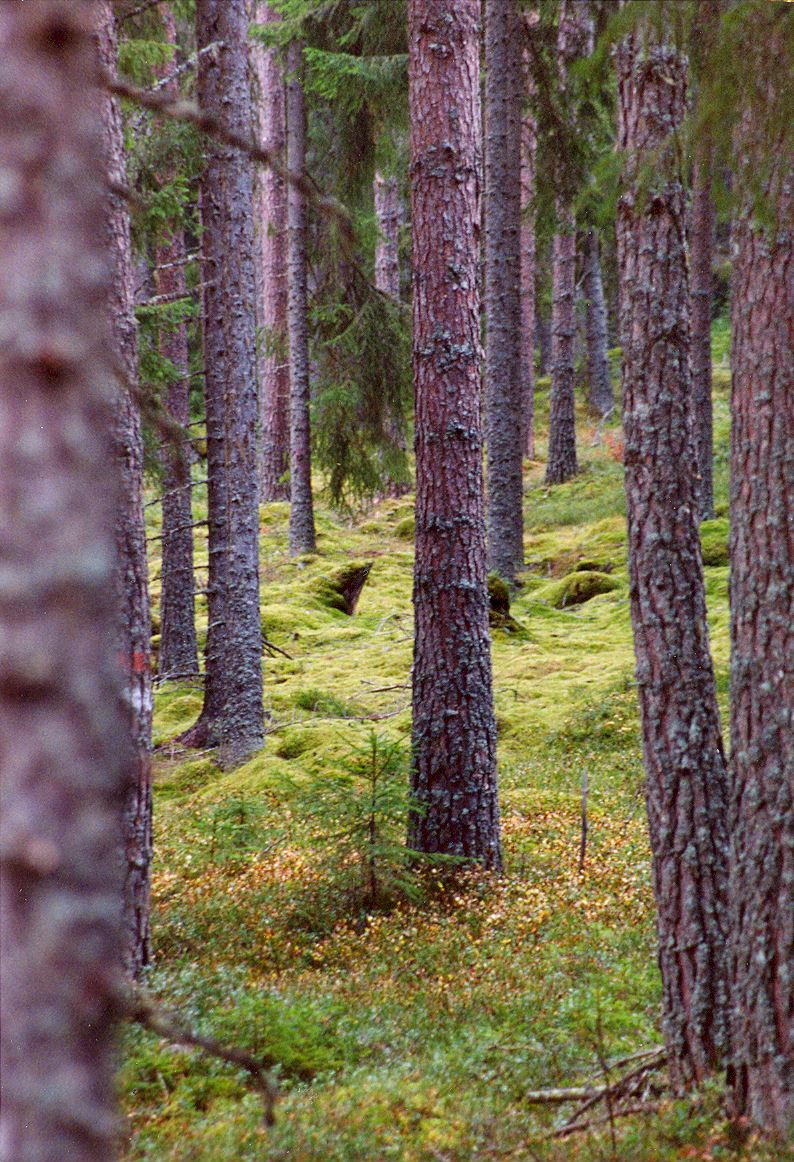 Naturreservat vid Grossjöberget