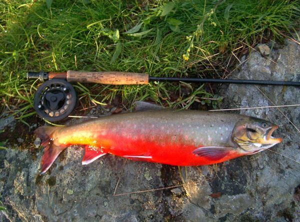 © Hemavan Tärnaby PR-förening, Fiske i Norge på Statskogs fiskekort