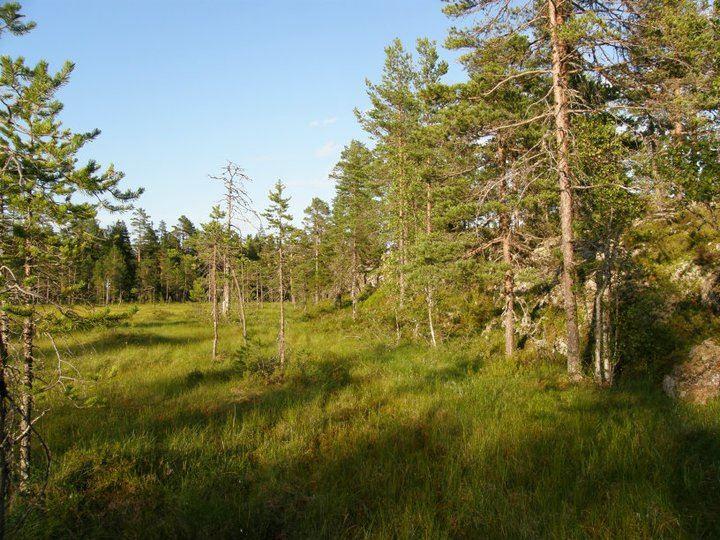 Wanderung mit einem Führer Svanängssåsen