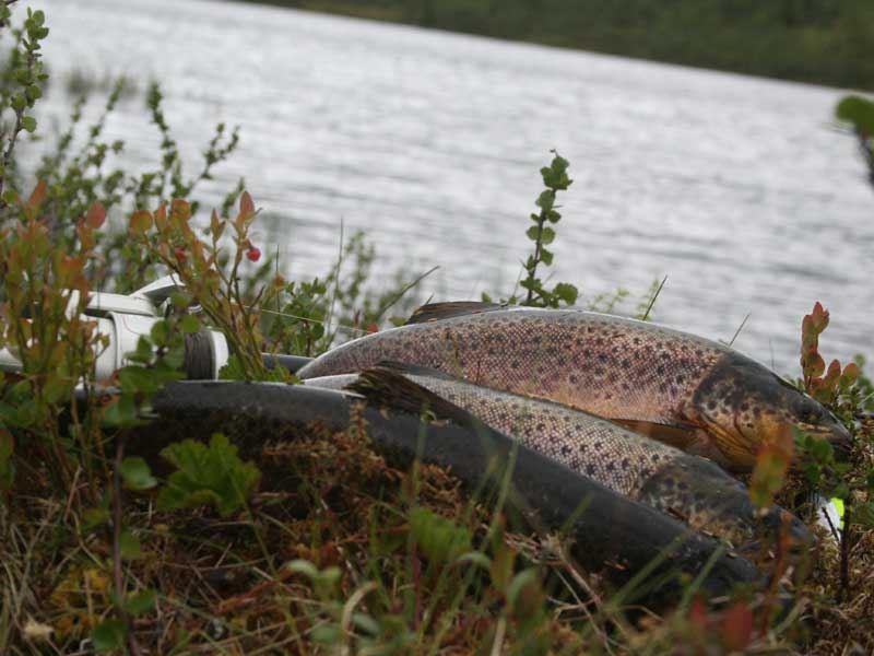 Trollklintens fiskevandring