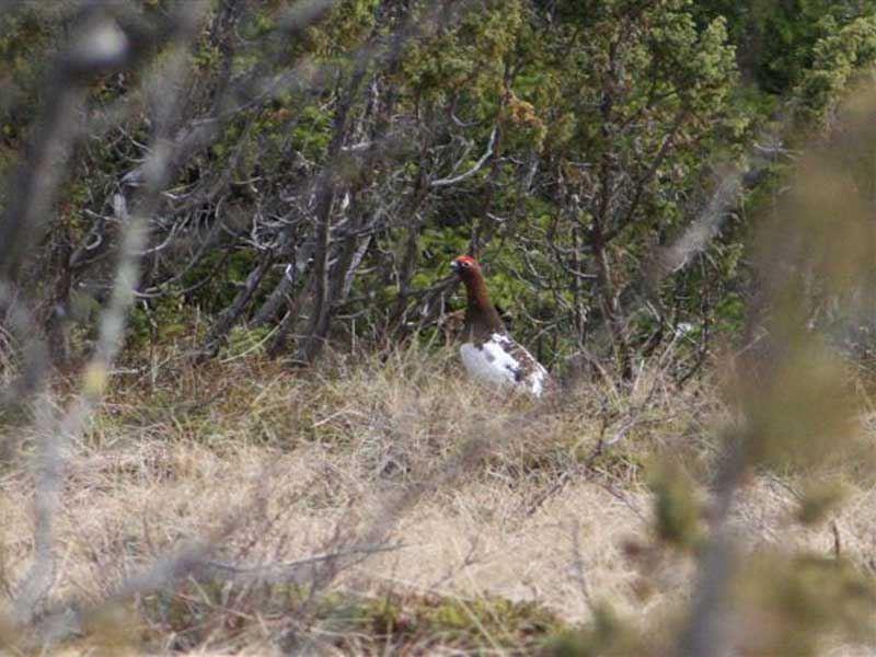 Fotovandring genom fjällbjörkens land