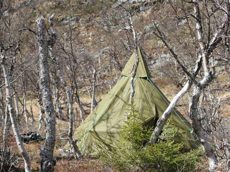 Trollklintens skogsvandring med bär & svamp