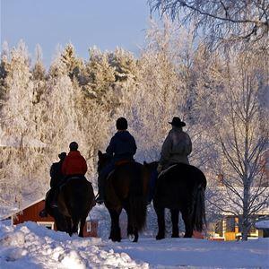 Nordsvensk vinter-ritt - Silverhill Stable