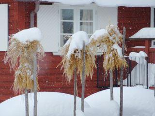 Gyllene Hornet, Tällberg