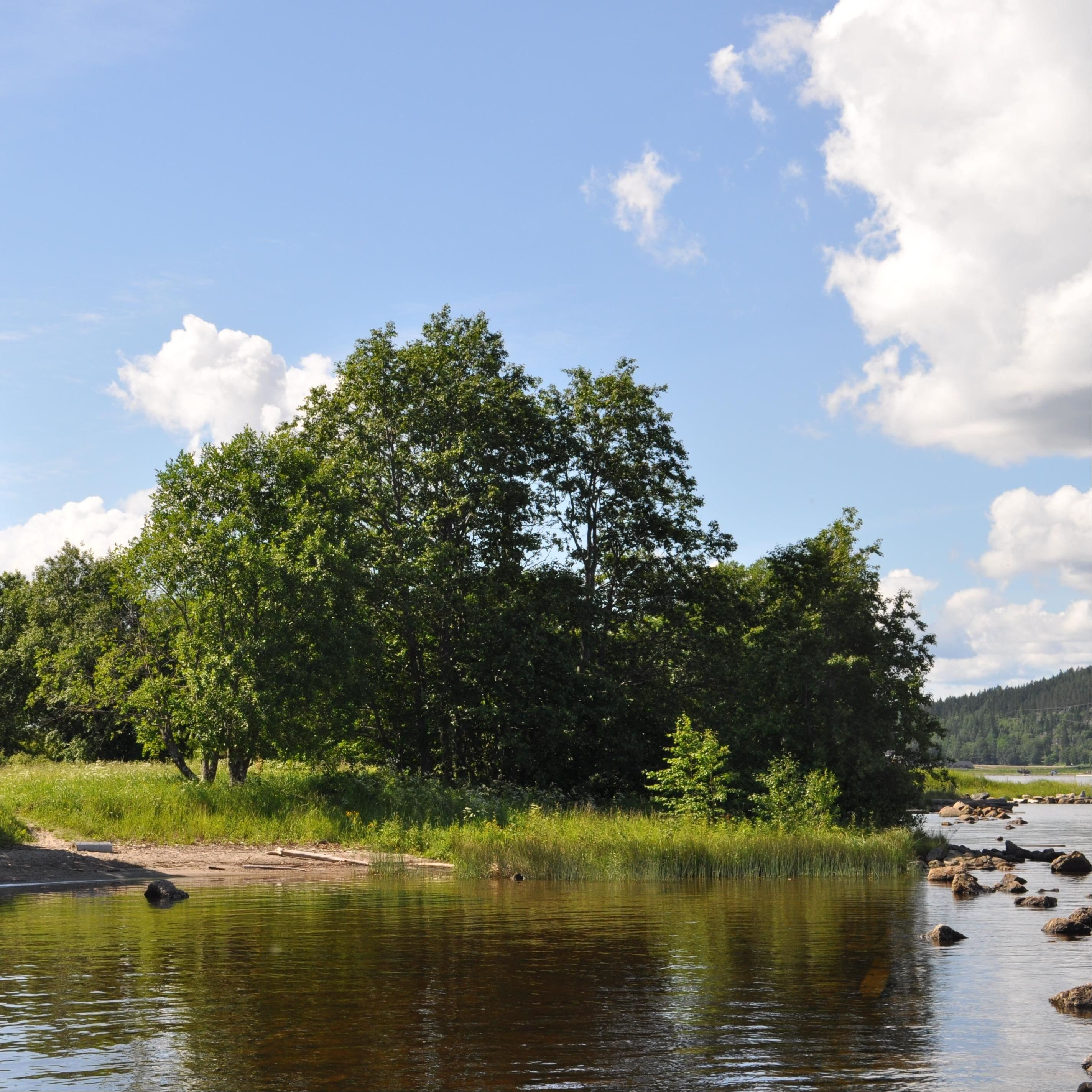 Klampenborgs naturreservat - rik lövskog på gammal sågverksmark