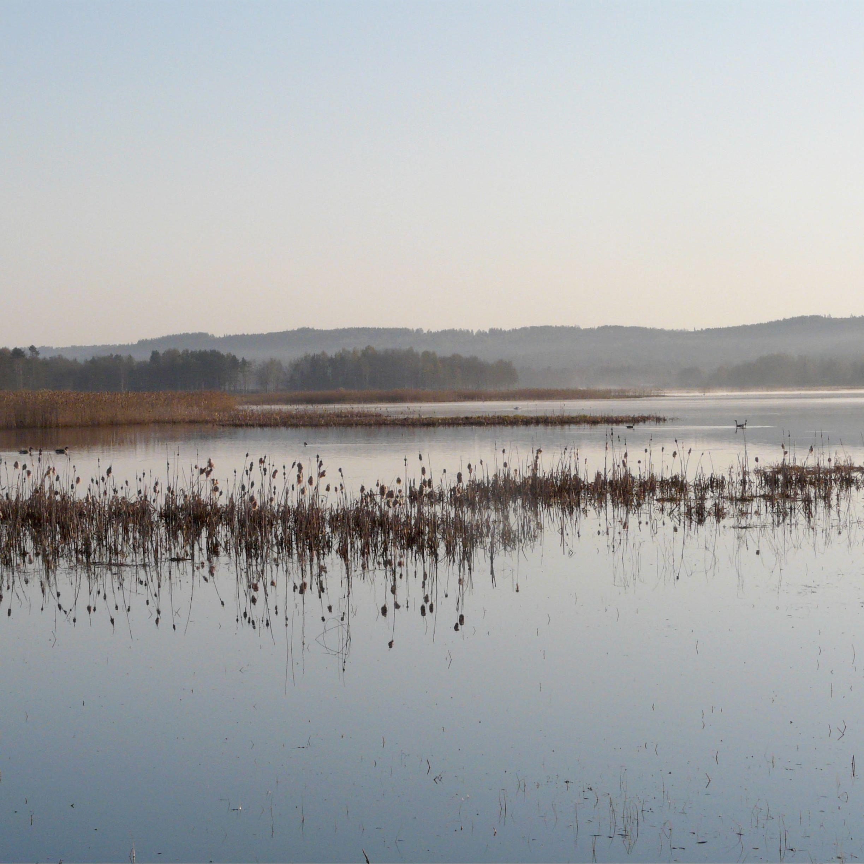 Limsjön - Vandringsled runt fågelsjön Limsjön