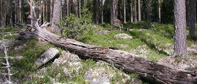 Rättviks Naturskyddsförening
